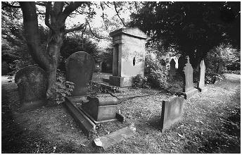 (5D)    Many graves are overgrown by Ivy and displaced trees