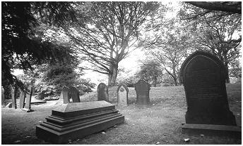 (5K)    Mature trees growing on inappropriate places indicates the extent of neglect of this beautiful cemetery